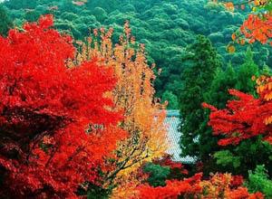 Fragrance Hills
